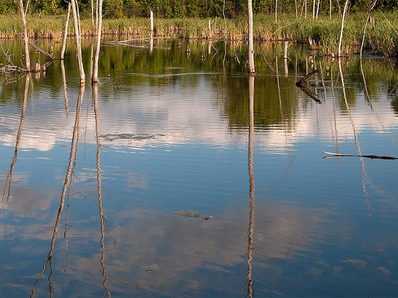 Reflections on the water - 2013 - 2