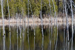 Title: Reflections on the water - 5