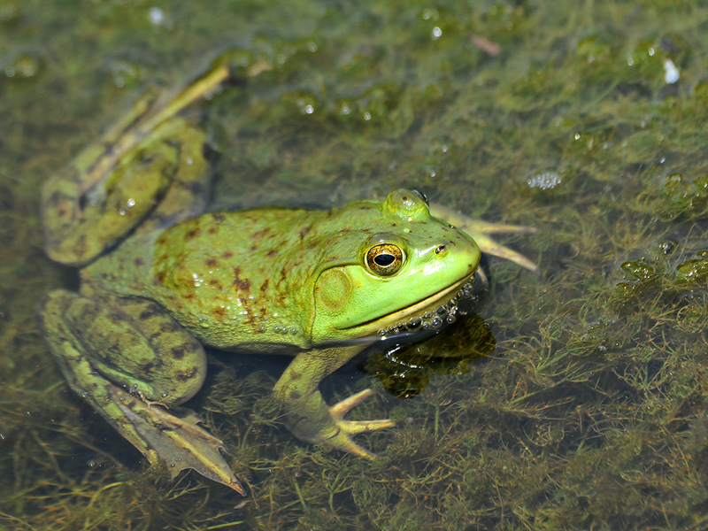 Frog - 2011 - 3