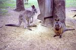 Title: Australian animals park - 2