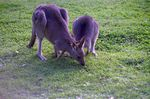 Title: Australian animals park - 4
