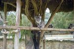 Title: Australian animals park - 7