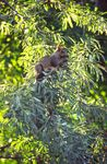 Title: Squirrel in the tree