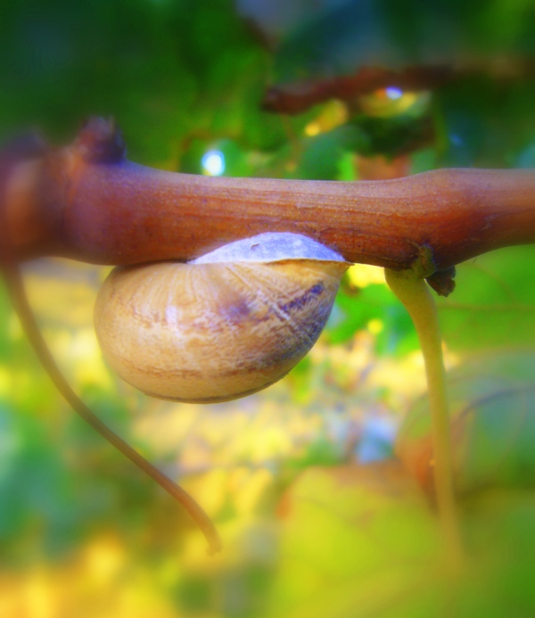 tiny snail, on a tiny branch ...