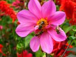 Title: The Busy Life of a Monastery Bee