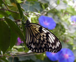 Title: Unknown butterfly