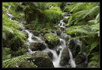 Title: Ferns and Falls