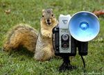 Title: One more Squirrel
