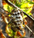 Title: Working Wasps