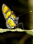 Title: Butterfly on Leaf