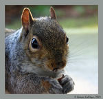 Title: The squirrel