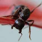Title: Hairy Ant