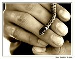 Title: Snake on Hand
