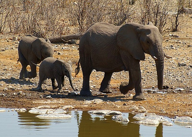 Going to the water hole