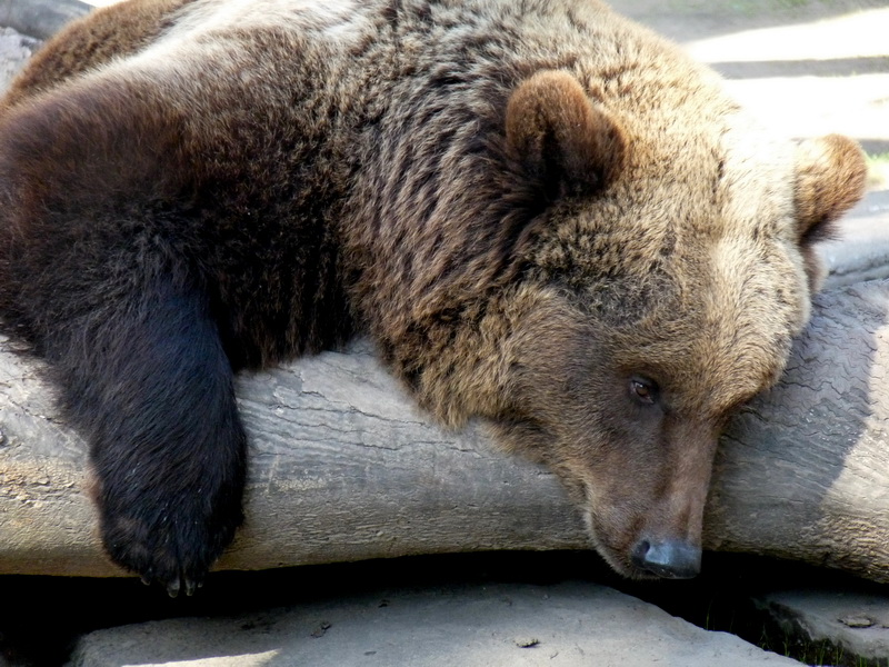 Image result for sad bear