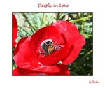 Title: poppy and bee
