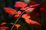 Title: colors of fall