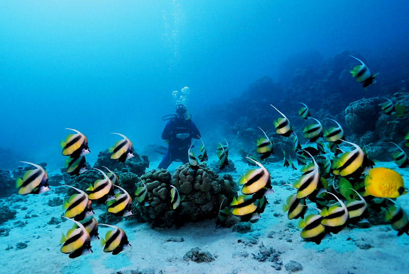 Red Sea - Egypt