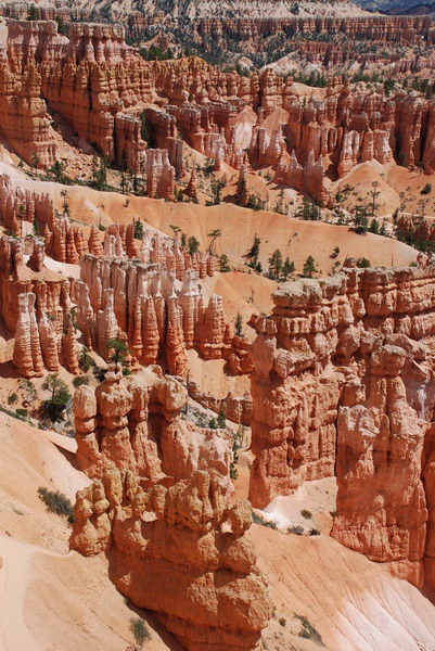 the bryce surprise