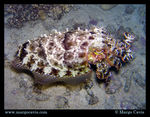 Title: Cuttlefish at nightOlympus C-5060WZ