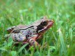 Title: Little Toad