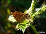 Title: Smiling Butterfly Camera: Olympus SP500UZ