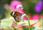 Title: Butterfly  in Park