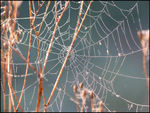 Title: Spiders Web