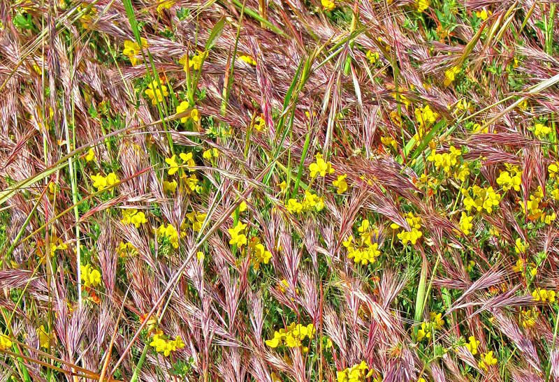 meadow texture