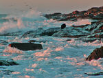 Title: sunrise surf & gulls