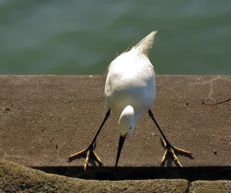 Posture in which it looks for food