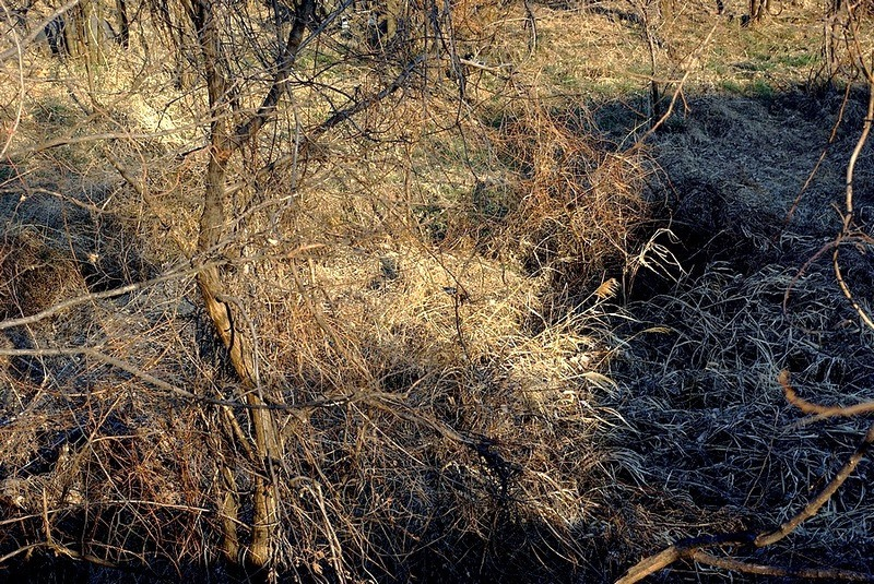 The thicket of a dry riverbed