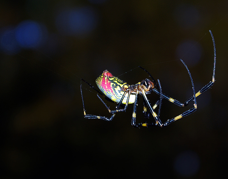 Spider in dark