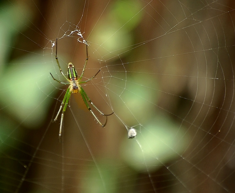 Green spider in woods