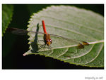 Title: Dragonfly on leafPentax K10D