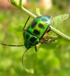 Title: Colorful Insect