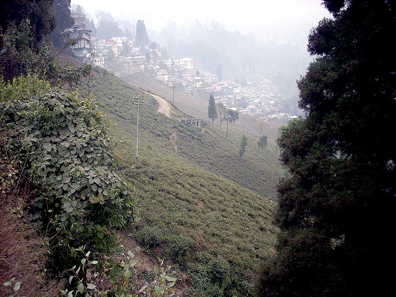 Hilly Slope