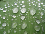 Title: Rain Drops on a Leaf !