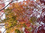 Title: The four colours of Autumn