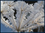 Title: You are cold as ice - Part II -