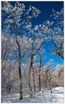 Title: Snow and Sunshine - My 100th post!