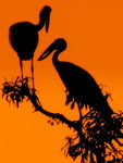 Title: The Silhouettes of The Birds