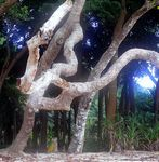 Title: Tree Trunk