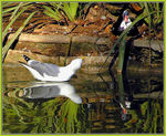 Title: Hello Mr Duck..how are you...