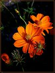 Title: Nice orange flower