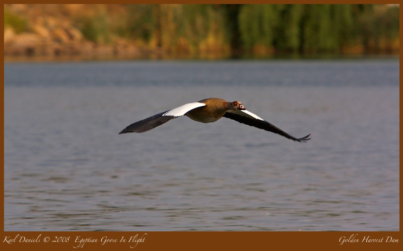The Flying Goose