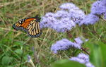 Title: Flutter-by