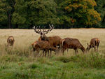 Title: The Stag at Bay
