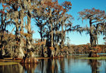 Title: Caddo Lake