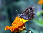 Title: Butterflies in the Tirthan Valley